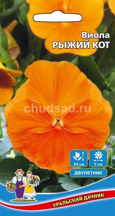 Цветы Виола крупноцветковая Рыжий кот Image